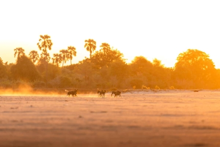 South Luangwa National Park Wildlife
